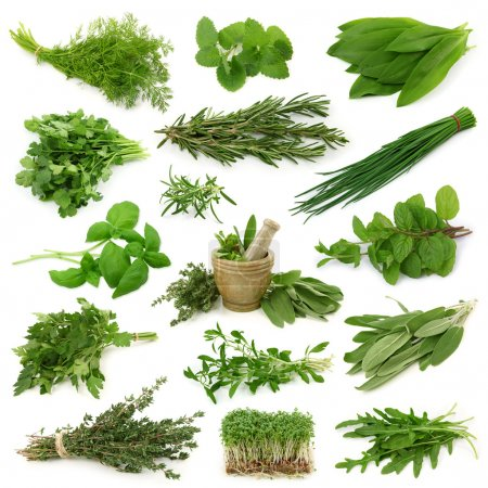 Photo for Fresh herbs collection isolated on white background - Royalty Free Image