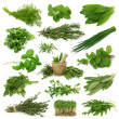 Fresh herbs collection isolated on white backgroun...