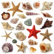 Seashell collection isolated on white background...