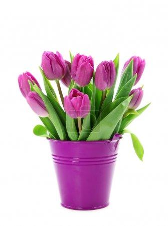 Purple tulips in bucket