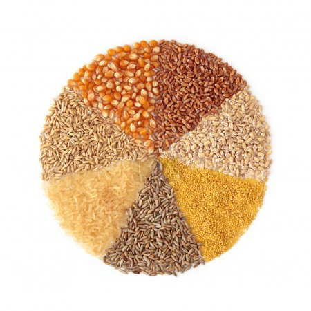 Photo for Cereals - maize ,wheat, barley, millet, rye, rice and oats - Royalty Free Image
