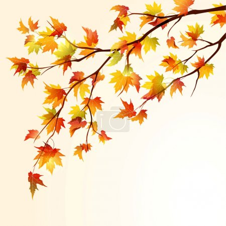 Illustration for Autumn maple tree branche on bright background. EPS10 - Royalty Free Image