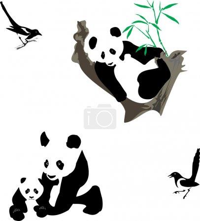Panda&magpies