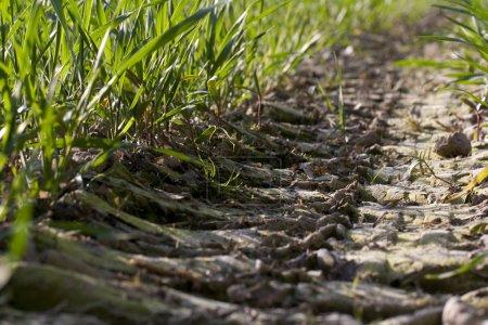 Photo pour Marque de pneu sur terre dans la prairie - image libre de droit
