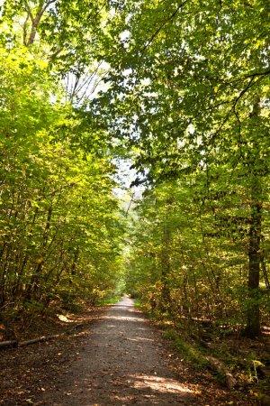 Photo pour Chemin d'accès dans la forêt avec de beaux arbres en harmonie - image libre de droit