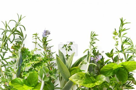 Photo for Border of fresh herbs, including rosemary, mint, basil, thyme, sage, parsley and oregano. - Royalty Free Image
