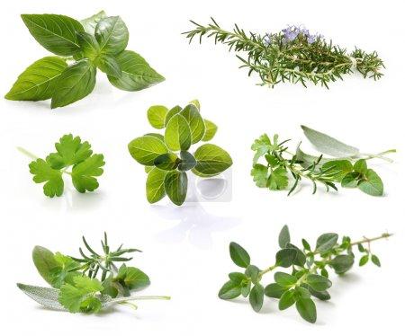 Photo pour Collection d'herbes fraîches, isolé sur blanc. fichier XXL. s'il vous plaît voir les images individuelles dans ma galerie. - image libre de droit