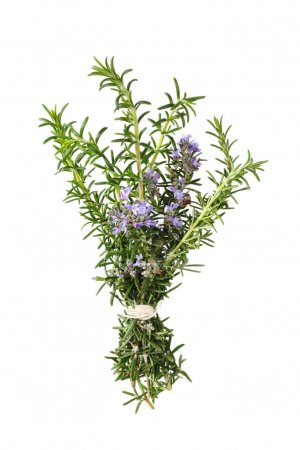 Photo for Bunch of flowering rosemary, tied with kitchen string. Isolated on white. - Royalty Free Image