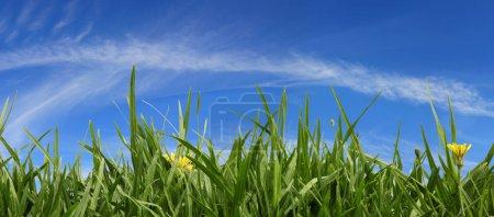 Grass and Sky Panorama