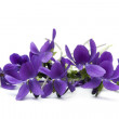 Bunch of violets, over white background....
