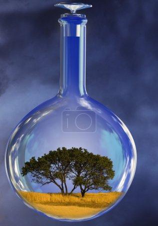 Tree in glass retort