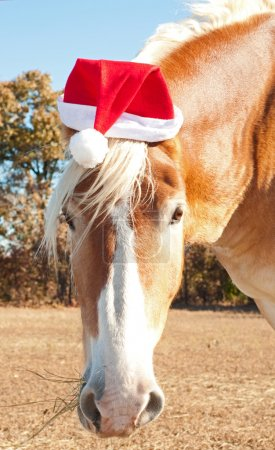 Santa's big huge helper - a beautiful blond Belgian Draft horse