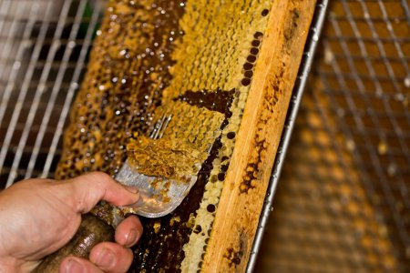 Photo pour Un peigne de miel décomposé avec une fourchette - image libre de droit