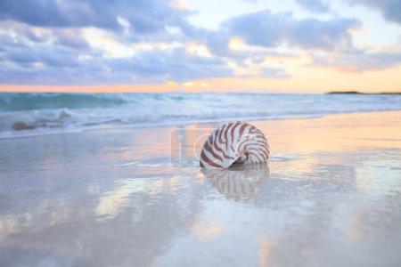 Nautilus shell on sea beach , sunrise.
