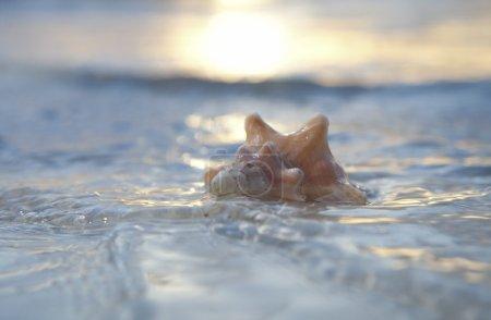 Seashell in the sea on sun background