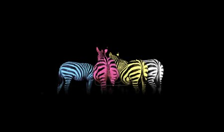 Photo for Cyan, magenta, yellow, and black (CMYK) colorful zebras (colored life) - Royalty Free Image