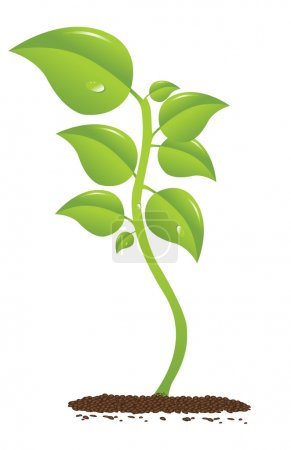 Illustration for Beautifull growing plant with drop - Royalty Free Image