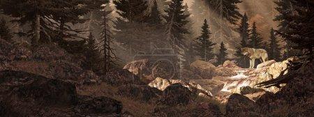 Photo pour Dans une forêt regardant en amont un loup traversant un ruisseau de montagne . - image libre de droit