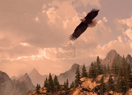 Bald eagle soaring in the Rocky Mountain high coun...