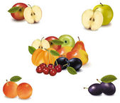 Photo-realistic vector illustration Big group of different fruit