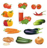 The big colorful group of vegetables Photo-realistic vector