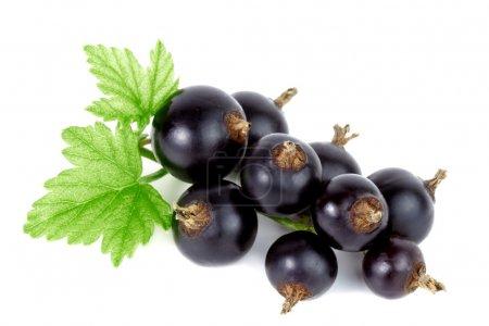 Black currant.