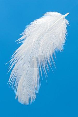 Photo pour Plume blanche sur bleu - image libre de droit