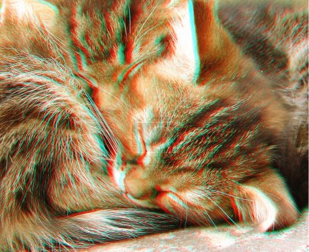 3D anaglyph of two sleeping cats