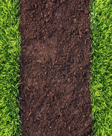 Photo for Healthy grass and soil pattern - Royalty Free Image