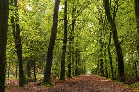 Photo pour Chemin de Forrest - image libre de droit