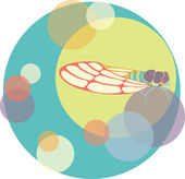 Vector cicada illustration circles color