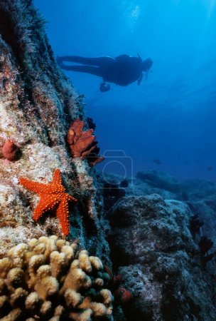Starfish Wall