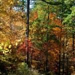 Scenic Autumn mountain road near Little Rock,Arkan...