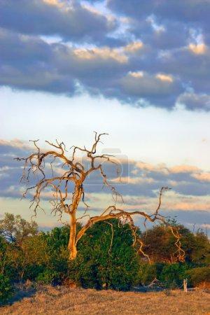 Kalahari at Dusk