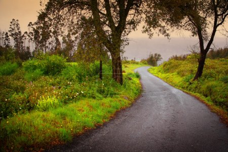 Photo for Landscape of mountain path with trees and fog in the distance. - Royalty Free Image