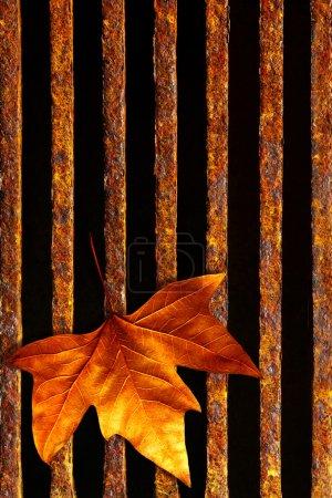 Leaf in drain