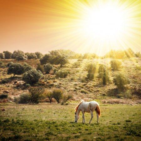 Photo pour Pâturage de chevaux blancs dans un paysage rural sous un soleil chaud - image libre de droit