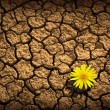 Pattern of cracked and dried soil With a sigle flo...