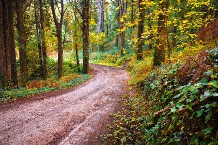Photo pour Paysage forestier avec un sentier de randonnée à l'automne - image libre de droit