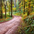 Forest landscape with a trekking footpath in the F...