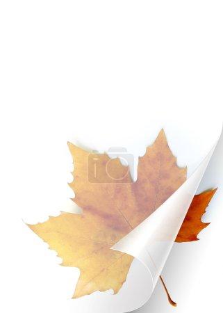 Photo pour Tournant la page de feuille transparente de papier indiquant une feuille d'automne - image libre de droit