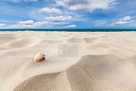 A couple of shell nuts on a tropical sandy beach. ...