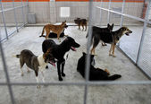 refuge chiens sans-abri