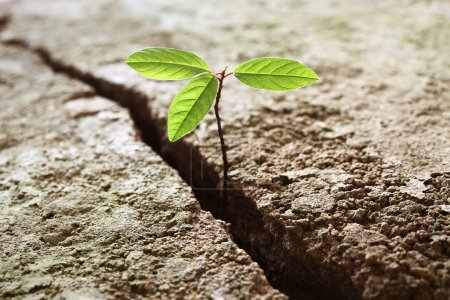 A young plant growing out of concrete. Concept of ...
