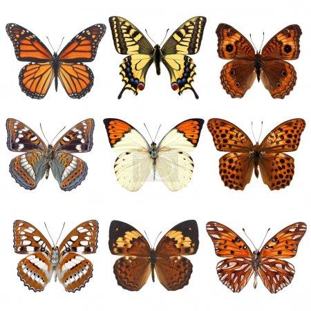 Бабочки, изолированные на белых