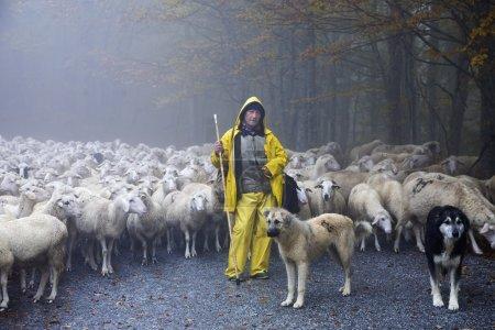 Pasteur conduit ses moutons