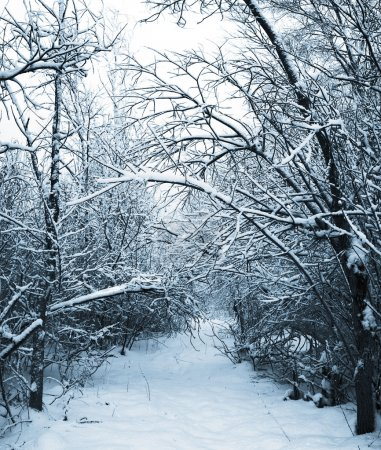 Snow-covered path in winter forest