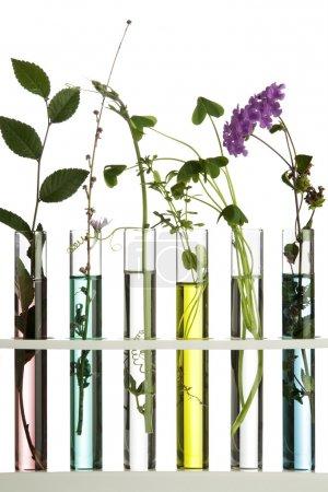 Photo pour Fleurs et plantes dans les éprouvettes - image libre de droit