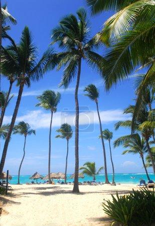 Beach scene in the Dominican Republic