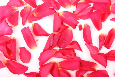 Abstract background of pink rose petals